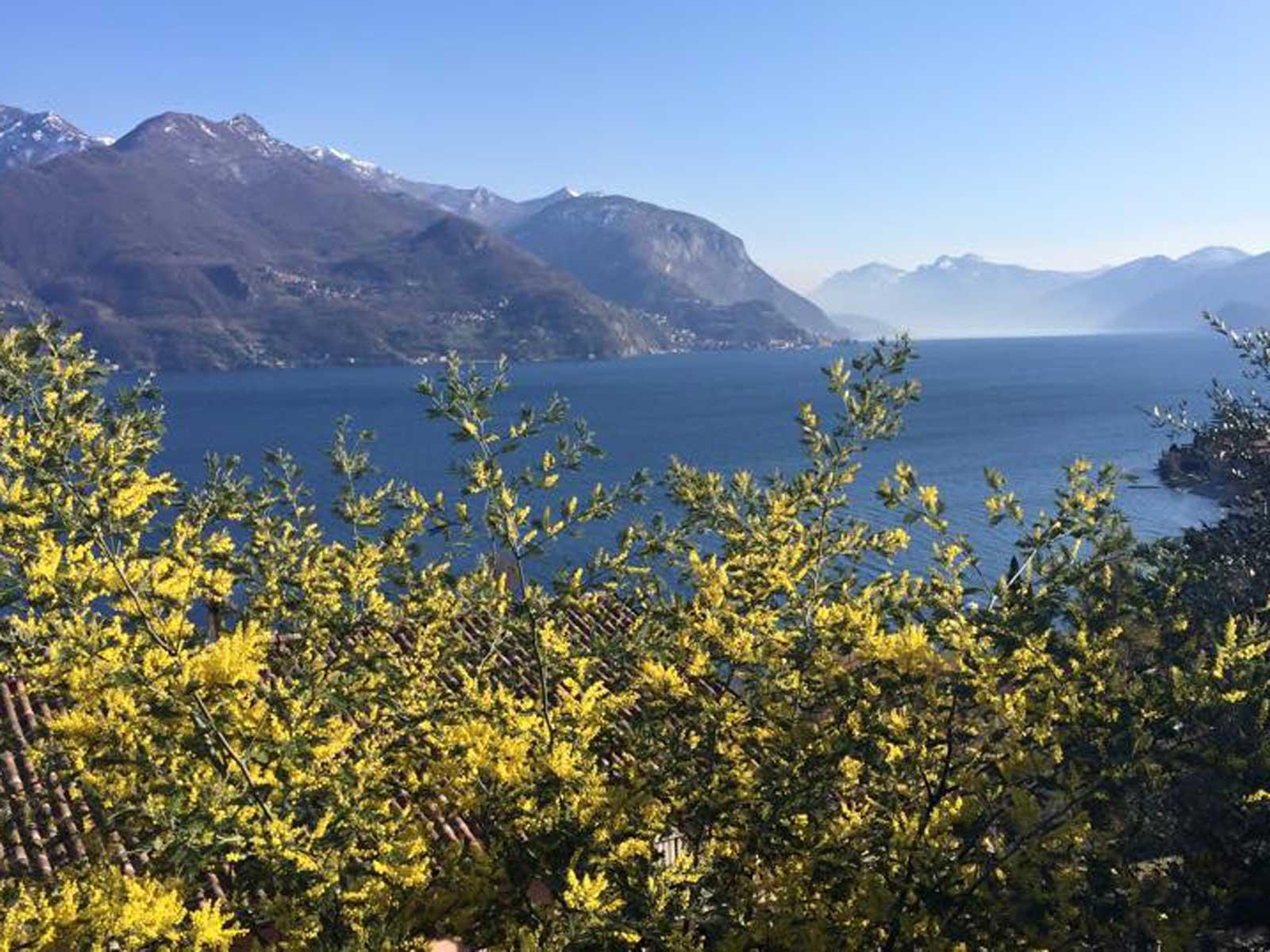 Bild von am See Blütenzauber