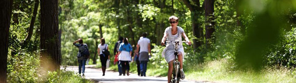 Bild von Wandern und Biken am Comer See