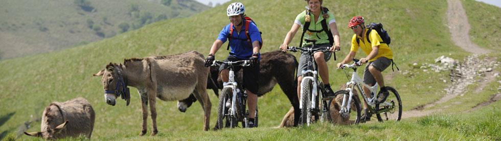 Bild von Mountainbike / Radfahren Comer See
