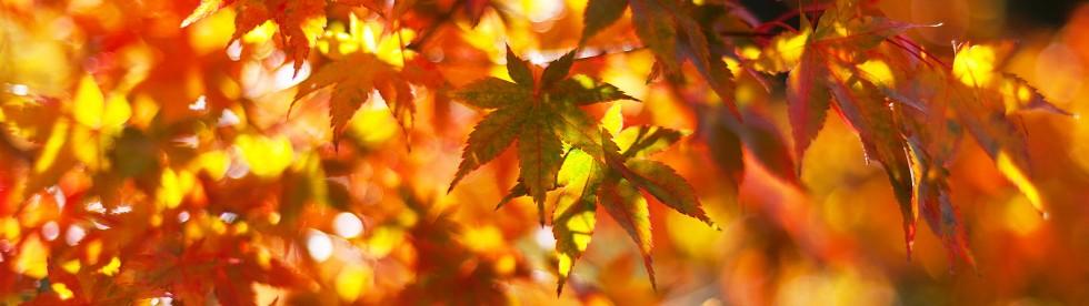 Bild von wetter am Comer See in Herbst